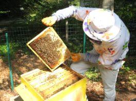 Пчеларите празнуват Свети Харалампий