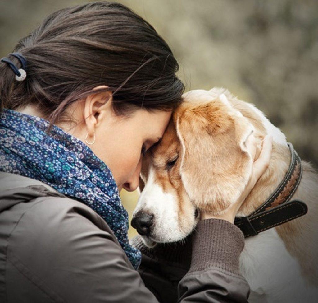 Ползите на медът при кучетата