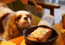 мед и куче