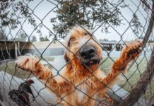 домашен любимец - куче