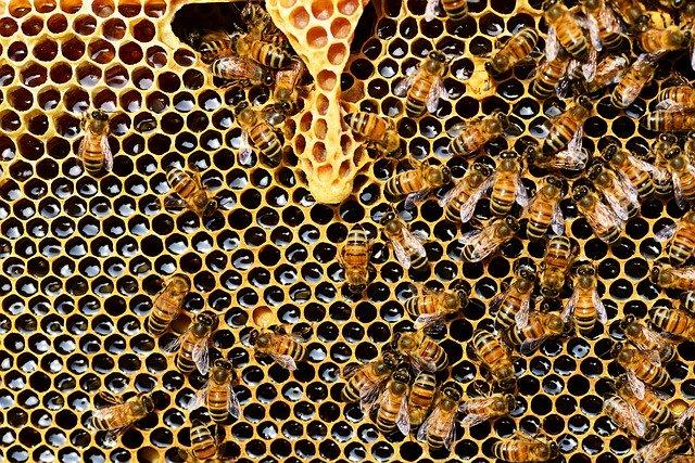 Пчелен прашец - ползи и приложение