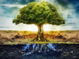 Елемента дърво