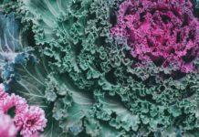 Кръстоцветните зеленчуци пазят от рак