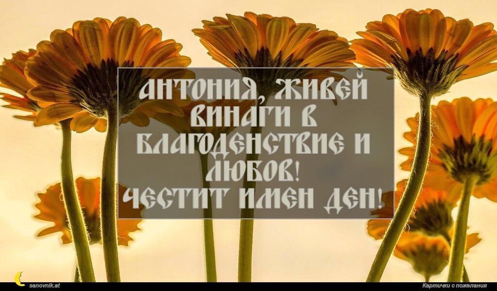 Антония, живей винаги в благоденствие и любов! Честит имен ден!